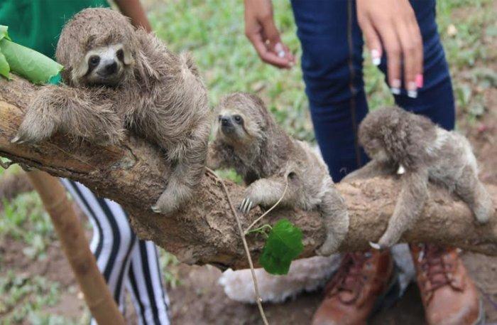 Al zoológico Municipal de Santa Cruz llegó la cigueña con ...